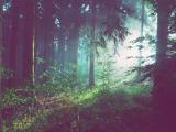 Kraftort Wald Hunsrück